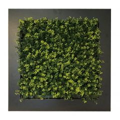 Green wall in frame (artificial buxus hedge) 67x67 cm