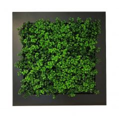 Green wall in frame (artificial Pachysandra hedge) 67x67 cm